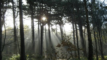Sunlight beams through the trees at Formby