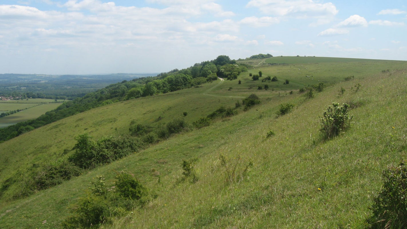 Looking east over the gently rolling chalk downland  towards Beacon Hill and the Weald from Harting Down