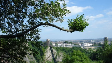 Bristol whitebeam with the Clifton suspension bridge behind