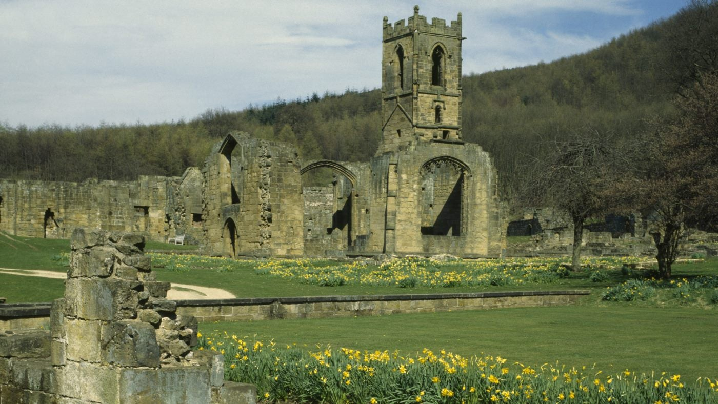 The ruins of Mount Grace Priory surrounded by daffodils
