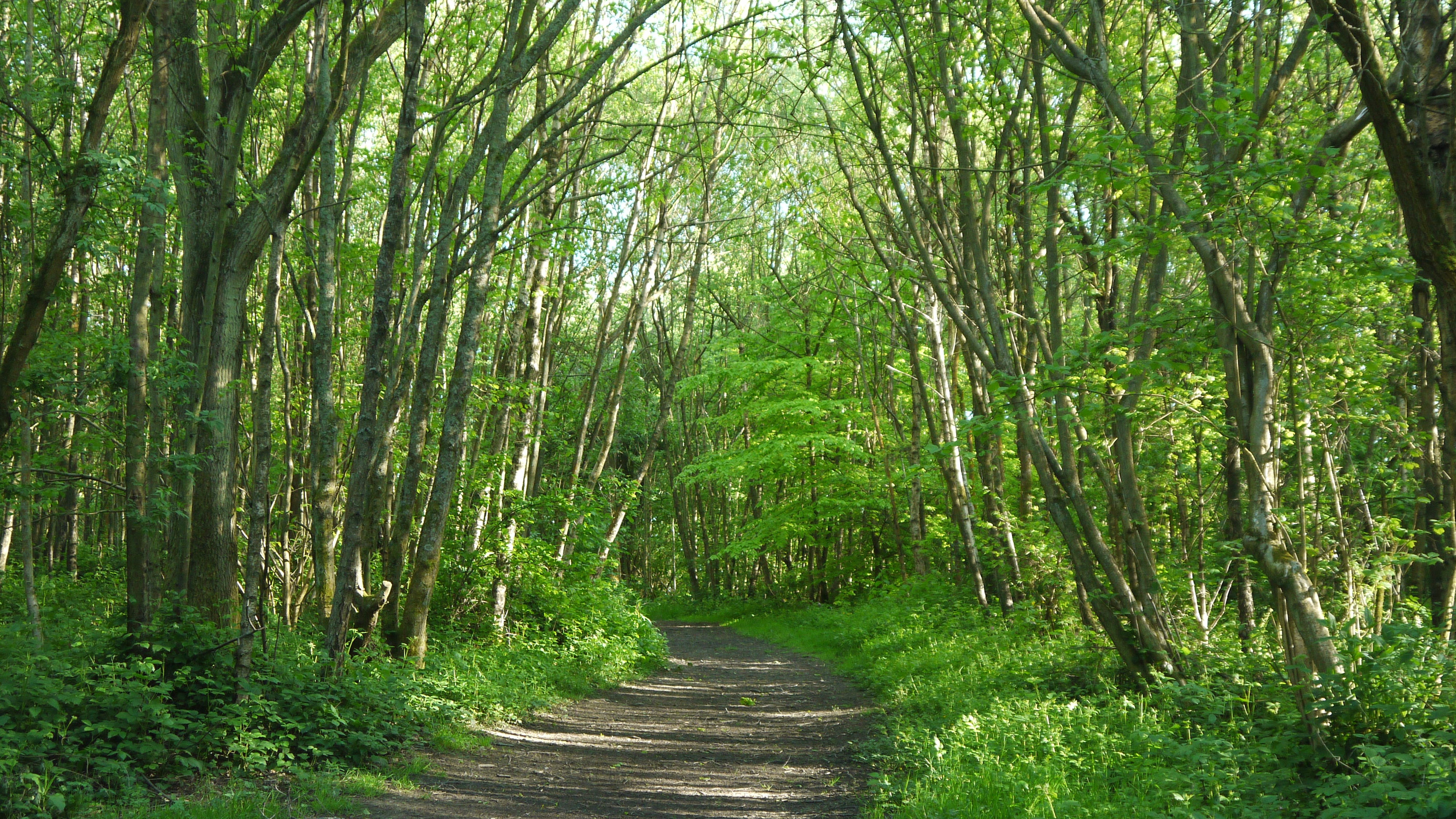 Pathway through woodland at One Tree Hill