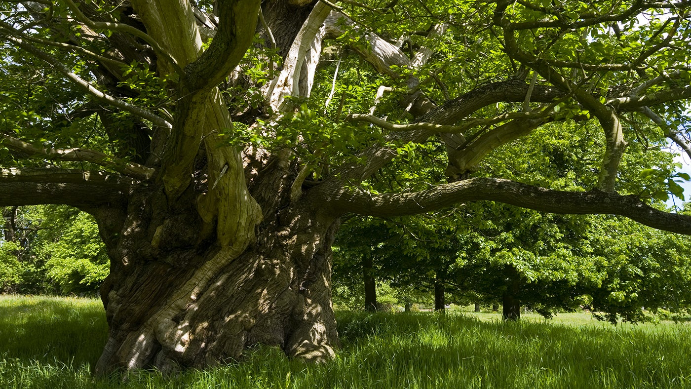 We care for many of the nation's most important trees, including historically significant trees and trees that