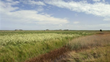 Reed marshes on Orford Ness