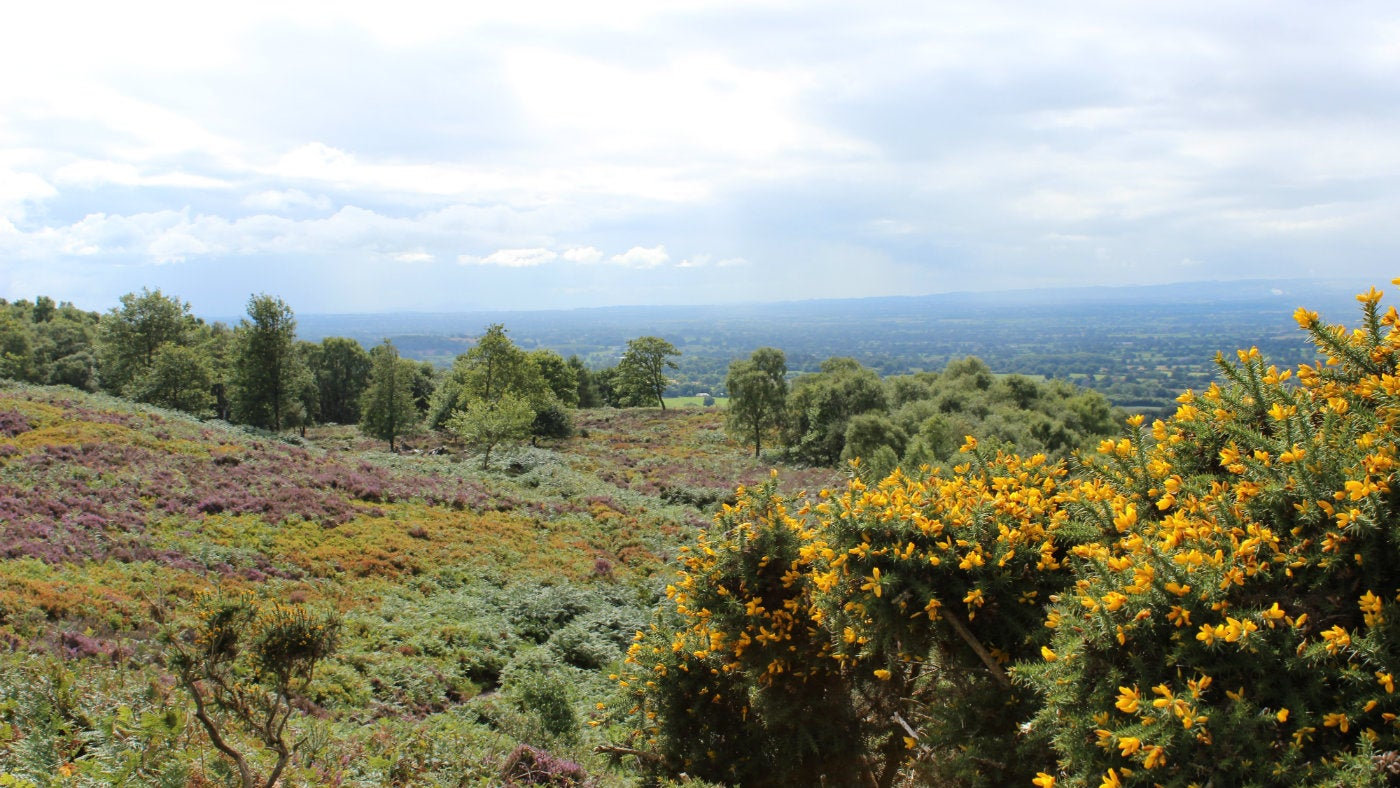 Alderley Edge And Cheshire Countryside National Trust