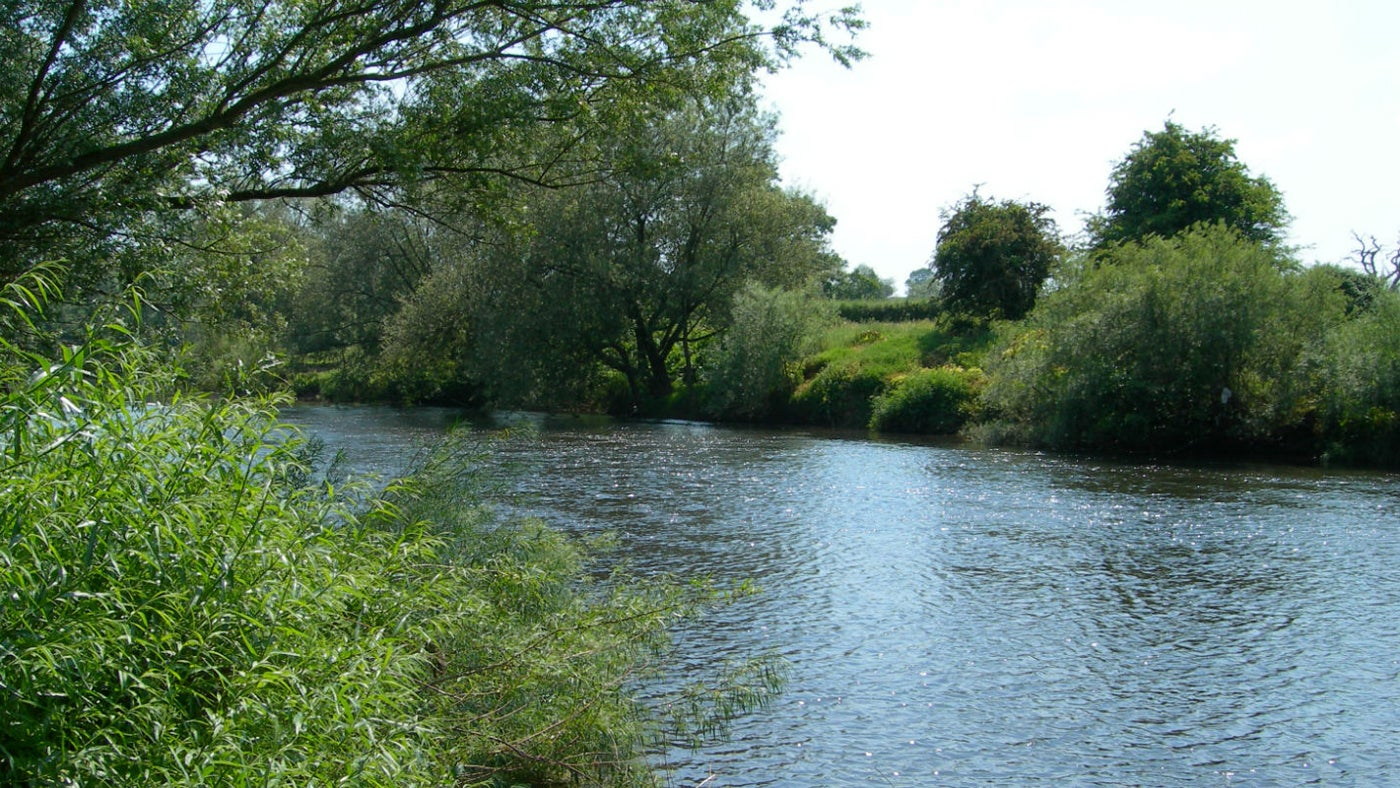 The River Usk in summer at Clytha Estate, Monmouthshire
