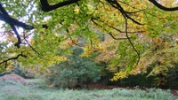 Autumn colours in the ancient woods at Slindon Estate