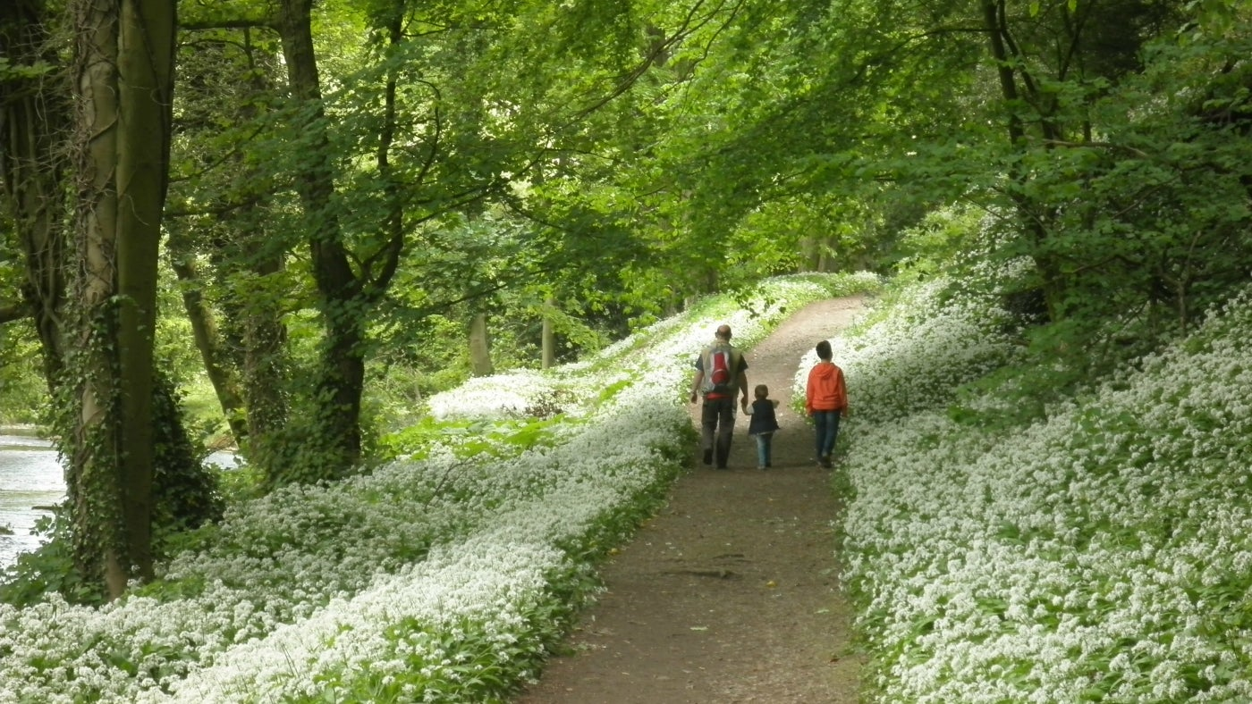 Walk through the wild garlic at Ilam Park