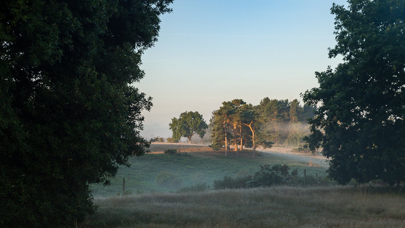 Sutton Hoo landscape in the mist