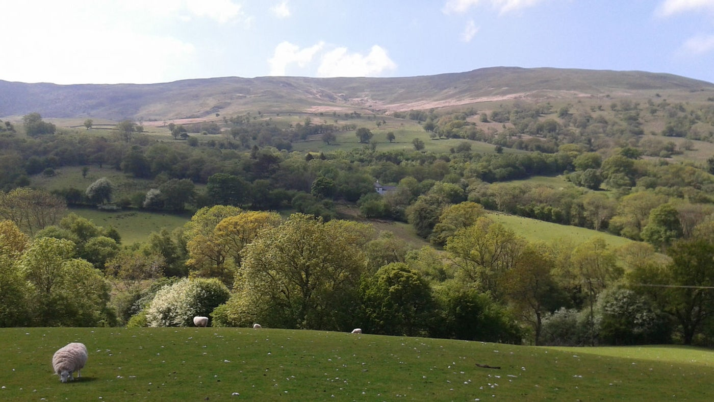 View of the Tarrell Valley woodlands