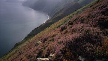 The purple of the heather looks stunning in the summer months